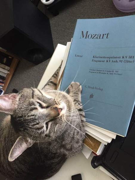 My cat Mozart, looking pleased with his work...